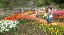 Парад тюльпанов Никитский  ботанический сад_17