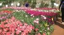 Парад тюльпанов Никитский  ботанический сад_19