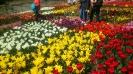 Парад тюльпанов Никитский  ботанический сад_20