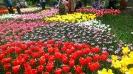 Парад тюльпанов Никитский  ботанический сад_24