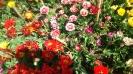 Парад тюльпанов Никитский  ботанический сад_35