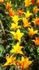 Парад тюльпанов Никитский  ботанический сад_37