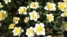 Парад тюльпанов Никитский  ботанический сад_41