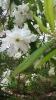 Парад тюльпанов Никитский  ботанический сад_50