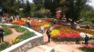 Парад тюльпанов Никитский  ботанический сад_6