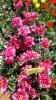 Парад тюльпанов Никитский  ботанический сад_9